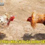 nha-cai-sv388-la-gi-gioi-thieu-chi-tiet-nhat-2021